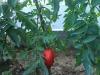 frutti-2